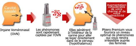 parfum aux phéromones